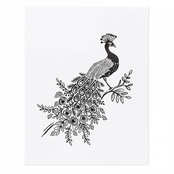 Peacock Art Print by RIFLE PAPER Co. | Made in USA