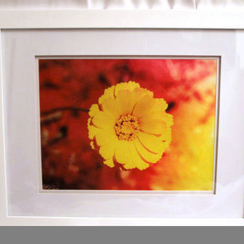10x13 Canvas - Framed - In Bloom - 50% Off - Signed & Numbered (#10/10) - S. Joseph Walker Photography - Only 1 Remaining