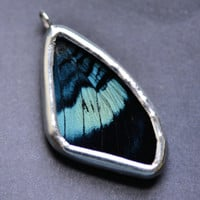 Real Butterfly Wing Necklace Panacea prola