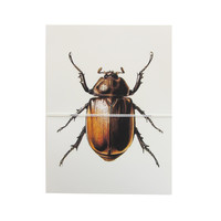 beetle note cards