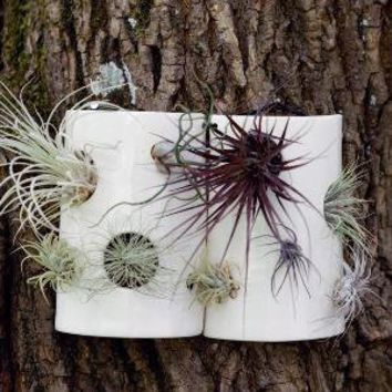 Airplant Wall Tile Second by PigeonToeCeramics on Etsy