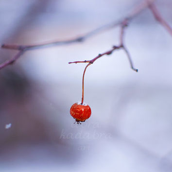 Winter red berry Instant Digital Download Art Photography Printable, nature photography, red and blue, winter mood photo