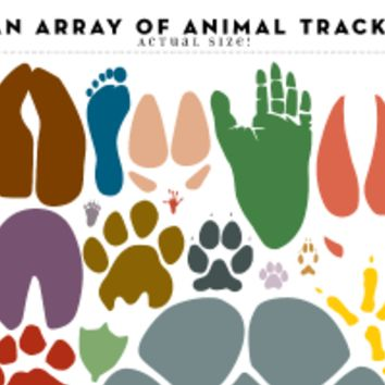 An Array of Animal Tracks: Actual Size!