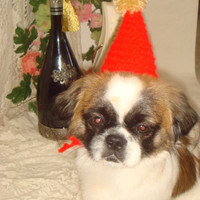 Happy birthday dogs hat. Red pompom birtday party hat for dogs. Ready to ship. Dogs fashion clothing handmade.