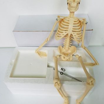 45cm human skeleton model teaching aid  Mini - Skeleton model Learning Resources Human Skeleton Model