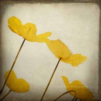 Yellow Poppy Flowers Photography gold beige brown by MaleahTorney