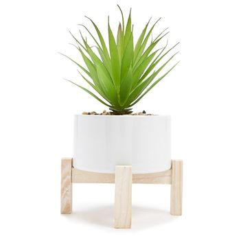 Decorative Succulent With Stand