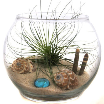 Air Plant Terrarium - Siesta Key Sands