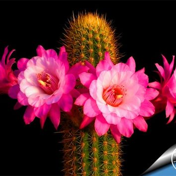Big Promotion Sale!10Seed/Pack cactus Rebutia variety flowering color cacti rare cactus seed office mini plant succulent,#1RR98A