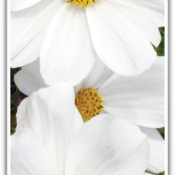 White and Bright Flowers, Fun for your Phone,  iPHONE 5 Case,  Ready to SHIP TODAY, Unique Gift, Treat Yourself Everyday