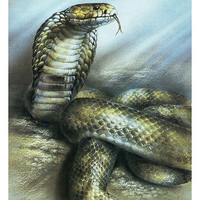 Central Asian Cobra - Naja Oxiana (Artist A. Isakov) Vintage Postcard - Printed in the USSR, «Fine Art», Moscow, 1990