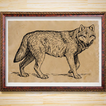 Animal print Antique decor Wolf poster