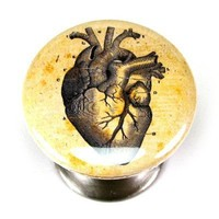 Anatomical Heart 1 Satin Nickel Cabinet Knob, Drawer Pull | DreameryStudio - Furniture on ArtFire