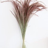 Dried Silk Grass in Pink - 2oz Bunch