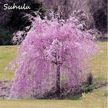 Bonsai Tree Japanese Sakura Tree seeds 20 Pcs Rare Red Cherry Blossoms Flowers Mixed Prunus Serrulata Diy Home Garden Plants