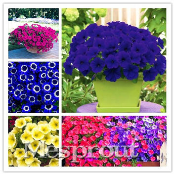 22 kinds Hanging Petunia Seeds,Garden Petunia Seeds, Mixed color 100pcs,Very Beautiful Garden Flowers Light Up Your Garden