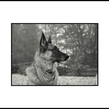 German Shepherd Photography Dog,black and white,Gifts under 25,canine,dog lovers print,dog,german shepherd lovers decor,autumn,foggy,misty