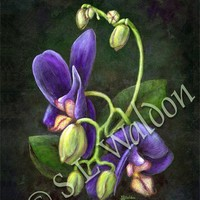 A Promise Of Orchids Acrylic Flower Painting 11X14 Art Poster Gift