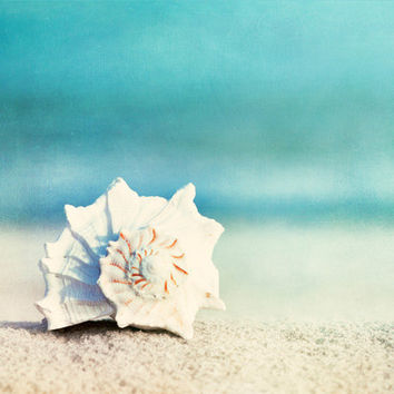 Beach Photography seashell conch shell ocean by CarolynCochrane