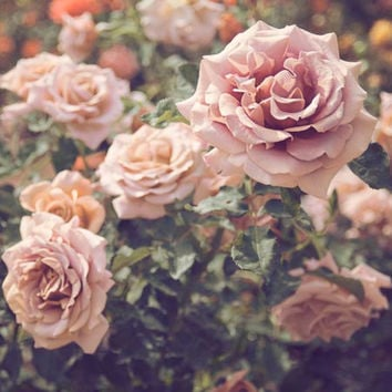 Floral Wall Art,  Rose Garden, Flower Photography, Roses, Nature Photography, Vintage Inspired, Romantic,  Pink, Green, 8x10