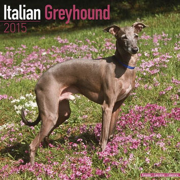Italian Greyhound Calendar - Breed Specific Italian Greyhound Calendar - 2015 Wall calendars - Dog Calendars - Monthly Wall Calendar by Avonside
