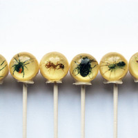 Insects spiders flies centipedes ball style edible images hard candy lollipop - 6 pc. - MADE TO ORDER