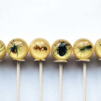 Insects spiders flies centipedes ball style hard candy lollipop - 6 pc. - MADE TO ORDER