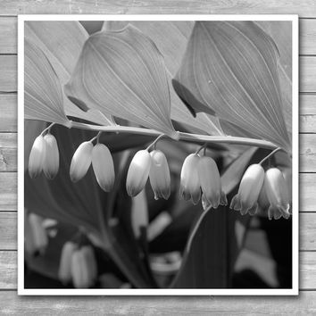White Bells Flower, Square Photo Prints, White Flower, Close up Flowers, Macro Photography, bw photography, black and white prints, giclee