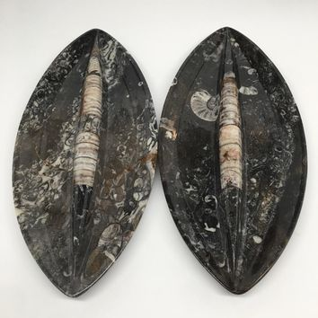 """2pcs,About 12""""x5.3"""" Fossils Orthoceras Ammonite Plates Dishes @Morocco,MF1350"""