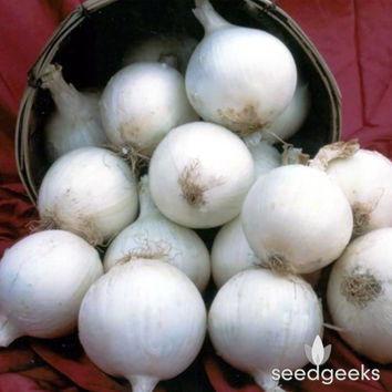 White Sweet Spanish Onion Heirloom Seeds - Non-GMO, Open Pollinated, Untreated