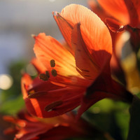 Sunkissed flowers - Fine Art Nature Photography - FREE SHIPPING - 8x10 print - bright - colorful