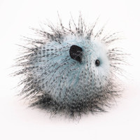 Stuffed Animal Guinea Pig Cute Plush Toy Guinea Pig Kawaii Plushie Urchin Ice Blue Guinea Pig Snuggly Cuddly Faux Fur Toy Small 4x5 Inches