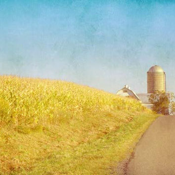 Golden Yellow Cornfield and Barn with Blue Sky - Fine Art Photo