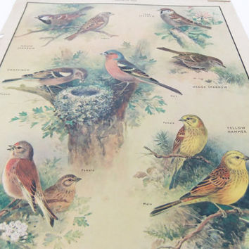 Birds Poster - Vintage School Chart, Home Decor, Housewares, Wall Hanging, Macmillans School Poster