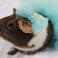 TUTU for Small Animal - Fun way to play dress up with your Guinea Pig, hamster, gerbil, hedgehog, ferret, or any other small animal
