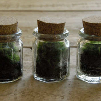 Live Moss Mini Terrarium with Cork by Vertegris