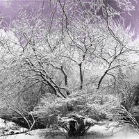Winter Wonderland Scene of snow covered trees fine art landscape photography 10 x 8 print surreal scene lavender purple dawn sky