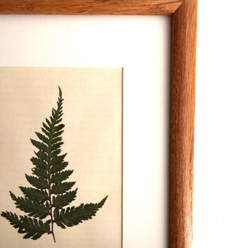 Framed Botanical Art. Real Pressed Ferns Framed. Wall Art. Ready to Ship