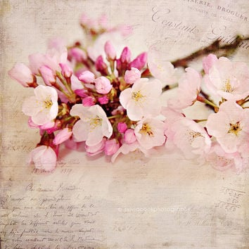 "Still life photography ""Cherry blossoms"" fine art print, floral photography,pink,flowers,Shabby chic decor,french typography,square print"