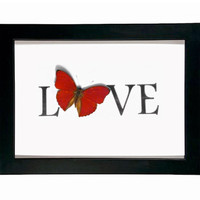 Red Love Real Framed Butterfly