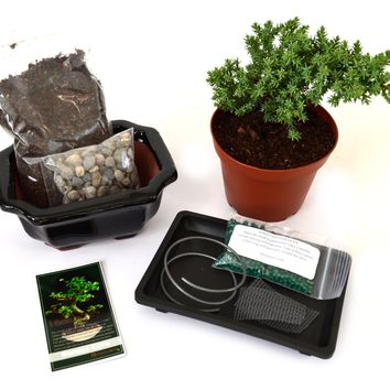 9Greenbox - Complete Juniper Bonsai Tree Starter Kit with Ceramic Vase and Water Tray