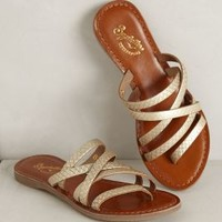 Madagascar Sandals by Seychelles Gold