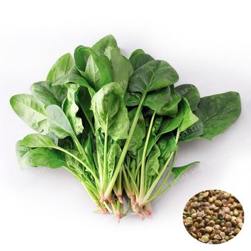 Spinach Seeds Salad Leaves Good Taste Non-GMO Green Organic Vegetables Seed DIY Home Garden Plant Easy To Grow 20 Pcs