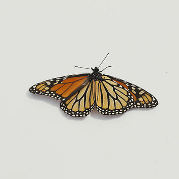 Orange Monarch Butterfly Still Life Fine Art Photography Home Decor Wall Art Minimalist Nature Photography Orange Monarch Butterfly