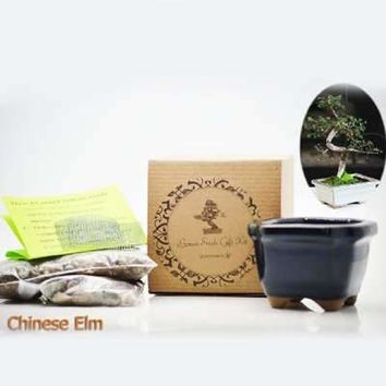Chinese Elm Bonsai Seed Kit- Gift - Complete Kit to Grow