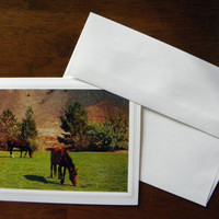 HORSE, Wild Horses, Handmade Photo Greeting Card, Mustangs, Reno NV, Coordinating Envelopes