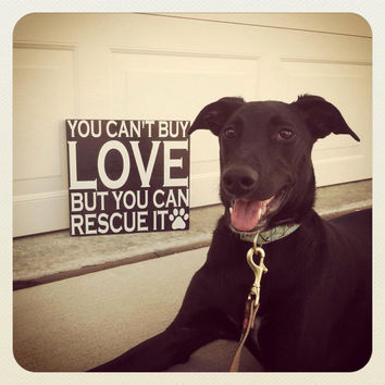 You Can't Buy Love But You Can Rescue It 8x8 Wood Sign