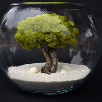 Japanese Dream Tree Terrarium