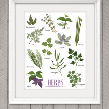 HERB POSTER, 8.5 x 11 Print, Kitchen Illustration, Home Decor, Wall Art, Charming and Unique Gift