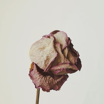 Floral Still Life Macro 8x10 Fine Art Photography Print Dried Rose Home Decor Wall Art Nature Decor Flower Garden Photography